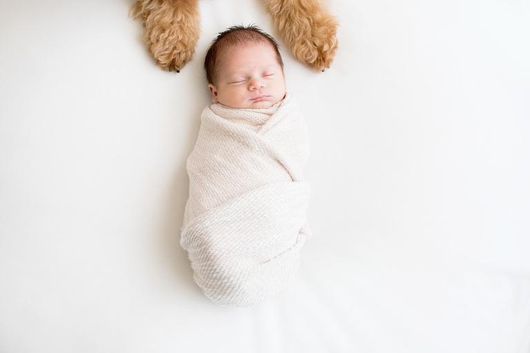 Puppy paws frame a newborn's head.   Houston Newborn Photographer