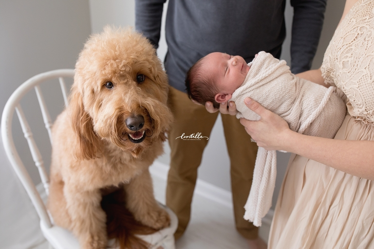 A puppy guards his baby  | Lentille Photography | Newborn Photographer in Houston