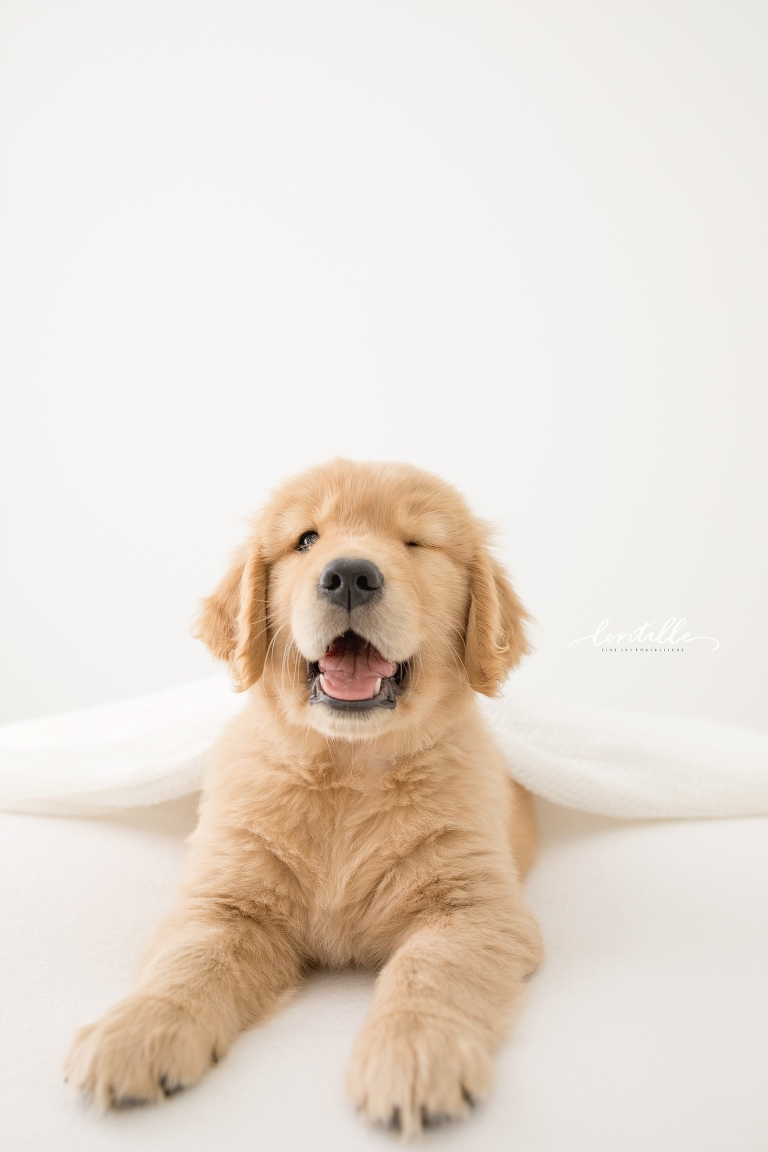 A new puppy gives a wink during his new puppy photography shoot.